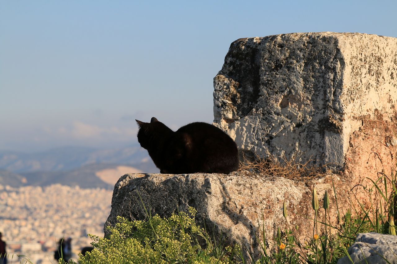photo 2017-03-28_acropole_65_athens_1280